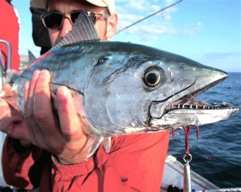 canary islands fishing drowning worms