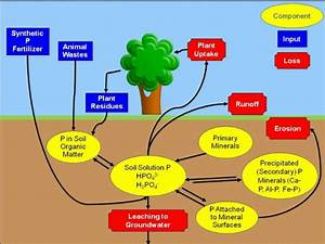 The Phosphorus Cycle  Credits  Amy L  Shober