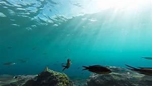 Aquatic Backgrounds (58+ images)  Aquatic