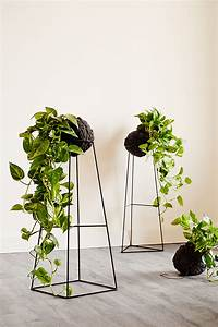 How to Make Your Plants Happy - Apartment34
