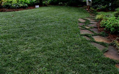 Buy Dwarf Mondo Grass Online From Wilson Bros Gardens