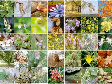 fiori do bach come curarsi con i fiori di bach ambiente bio