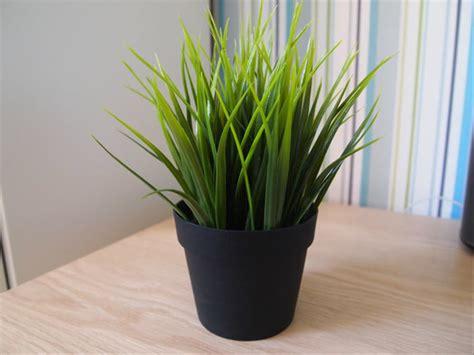 jual ikea tanaman hias pot ruang tamu kamar bunga