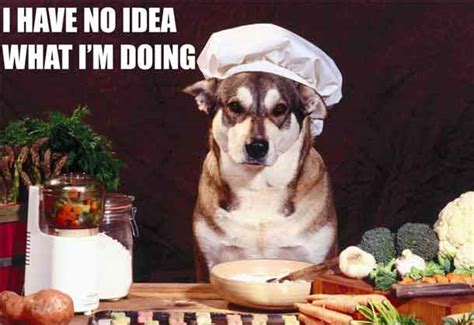cuisiner pour chien quel est le truc le plus con que ton ait jamais fait