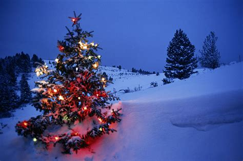 pink snowing christmas tree christmas lights decoration