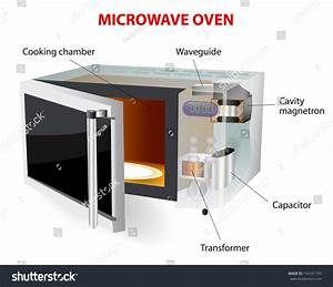 Microwave Oven  Vector Diagram  How Does This Work  Microwave Oven  Microwave  Is A Kitchen