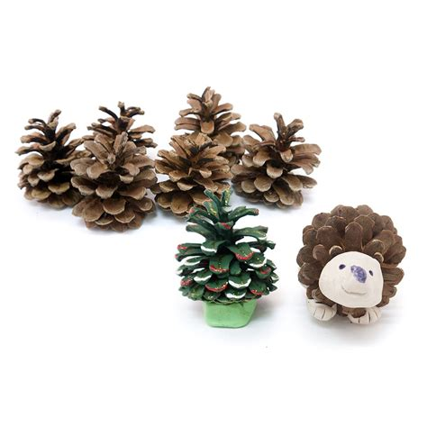 pine cones for crafts pine cones 10 pack craft essentials from crafty crocodiles uk