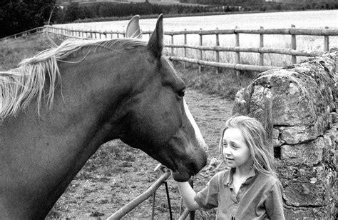 emotions horses human read respond
