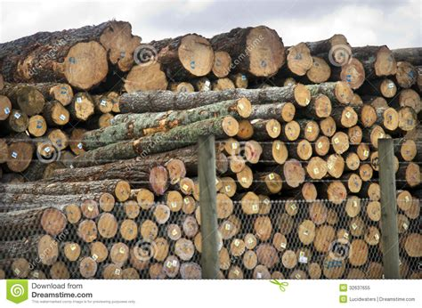 zealand forest products editorial image image