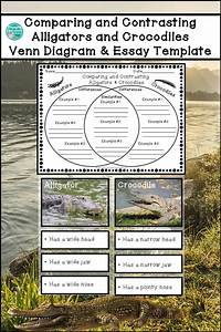 Comparing And Contrasting Alligators And Crocodiles