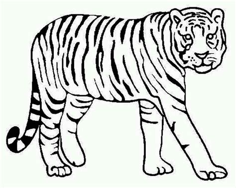 Coloring Harimau by Tiger Coloring Pages The 56 Gianfreda Net