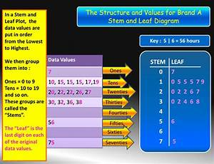 Need Help Do My Essay Comparative Stem And Leaf Diagram Of
