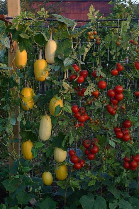 What Can You Grow In A Vertical Garden by 20 Vertical Vegetable Garden Ideas Home Design Garden