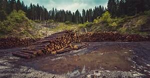 The Devastating Impacts Of Deforestation