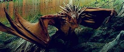 Potter Harry Magical Dragon Rowling Dragons Hogwarts