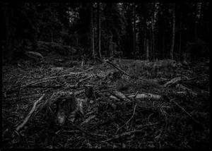 Dark Forest | René Timmermans Photography