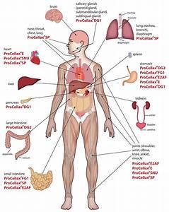 Libbylangrana2photography  Diagrams Of The Human Body
