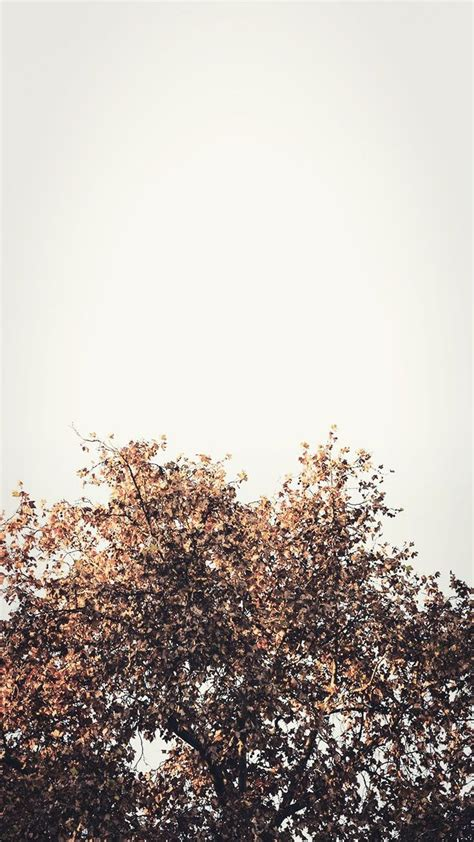 Fall Backgrounds For Iphone Aesthetic by Aesthetic Fall Wallpapers Top Free Aesthetic Fall