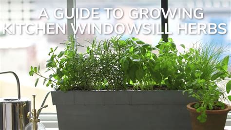 herbs windowsill grow own kitchen