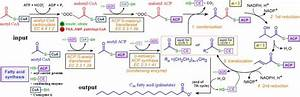Fatty Acid Synthesis Made Easy