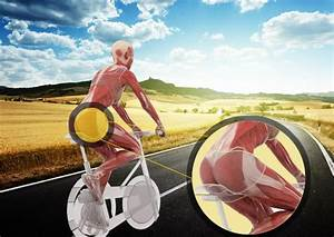 Muscle Groups Targeted While Cycling
