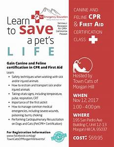 Learn To Save A Pet's Life! Gain Canine & Feline ...