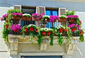 balkonpflanzen kauf pflege winter wie sommer With französischer balkon mit sonnenschirm jumbo