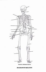 Labeled Human Skeleton Diagram