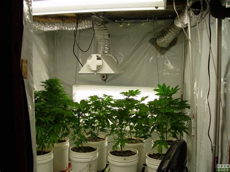 r 233 flecteurs et balanceurs pour les jardins hid graines de