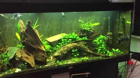 juwel 400 aquarium shrimp pleco juwel 400 aquarium