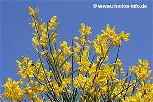Aktuelle Blumen Im April : flora auf rhodos ~ Markanthonyermac.com Haus und Dekorationen