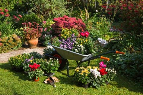 how to get free plants and seeds 13 frugal gardening