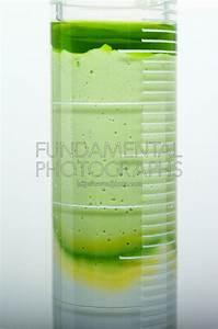 science chemistry diffusion | Fundamental Photographs ...