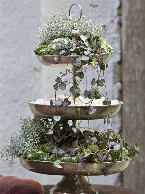 etagere pflanzen dekor winterpflanzen und indoor garten