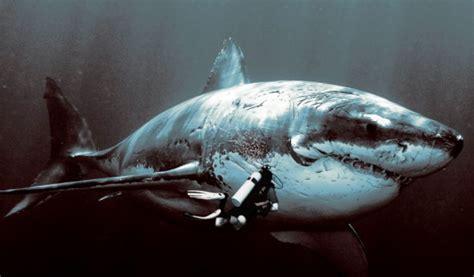 megalodon  alive scientific fishing trip reveals