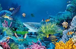 different underwater animals  Aquatic