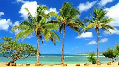 Tropical Desktop Paradise Widescreen Wallpapers 1080 1920