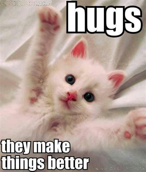 Cat Hug Meme - pin by holly torgerson on cats antics pinterest