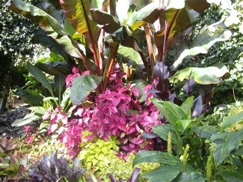 hardy plants for garden cold hardy exotic plants for that tropical garden effect the garden of eaden