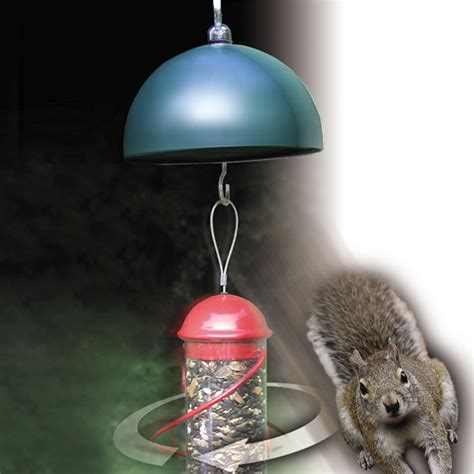 songbird essentials twirl a squirrel electronic bird