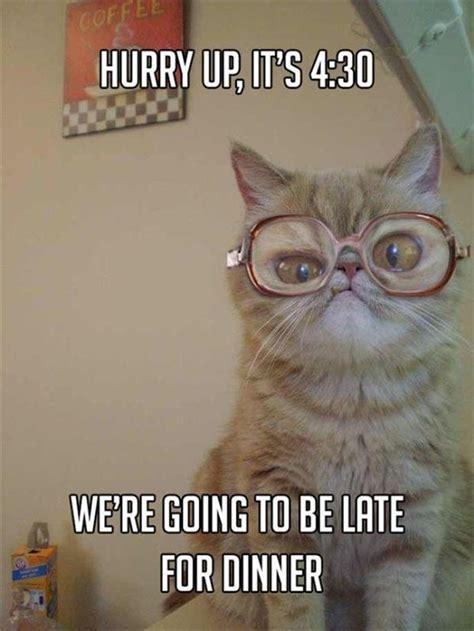grandma cat meme  pics
