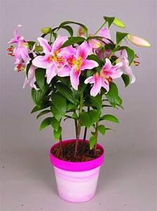 Fleur De Lys Plante : campanules paris c t jardin ~ Melissatoandfro.com Idées de Décoration