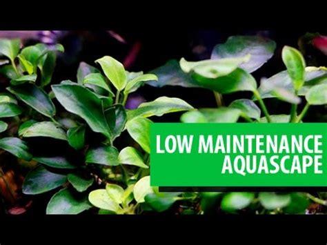 Aquascape Maintenance by Low Maintenance Aquascape Indonesia 54l 14g