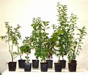 Sanddorn Pflanzen Kaufen : sanddorn hippophae rhamnoides preiswert jederzeit pflanzbar ~ Eleganceandgraceweddings.com Haus und Dekorationen