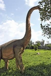 Massive Brachiosaurus Dinosaur Statue - The Green Head