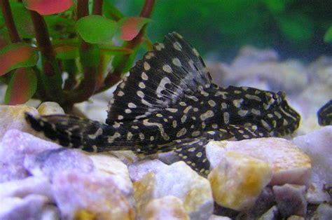 pet tropical fish species