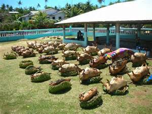 Rug Print by Wallis Et Futuna Pauvre Cochons Turcanin Cu ţ