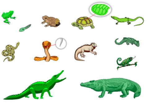reptiles amphibians french vocabulary languageguideorg