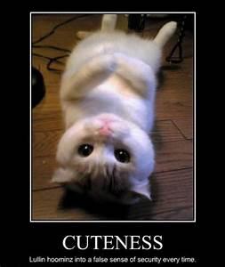Cute Scottish Fold Cat