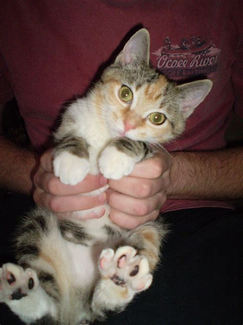 cat pets therapy bad why health pet habits cats every petsafe dealing ownership responsible dogs besides reasons hug